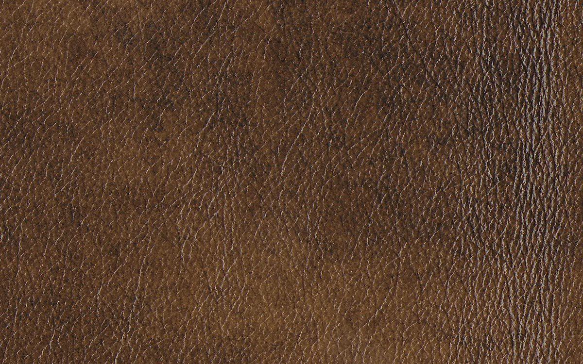 Windsor Ash (sample)
